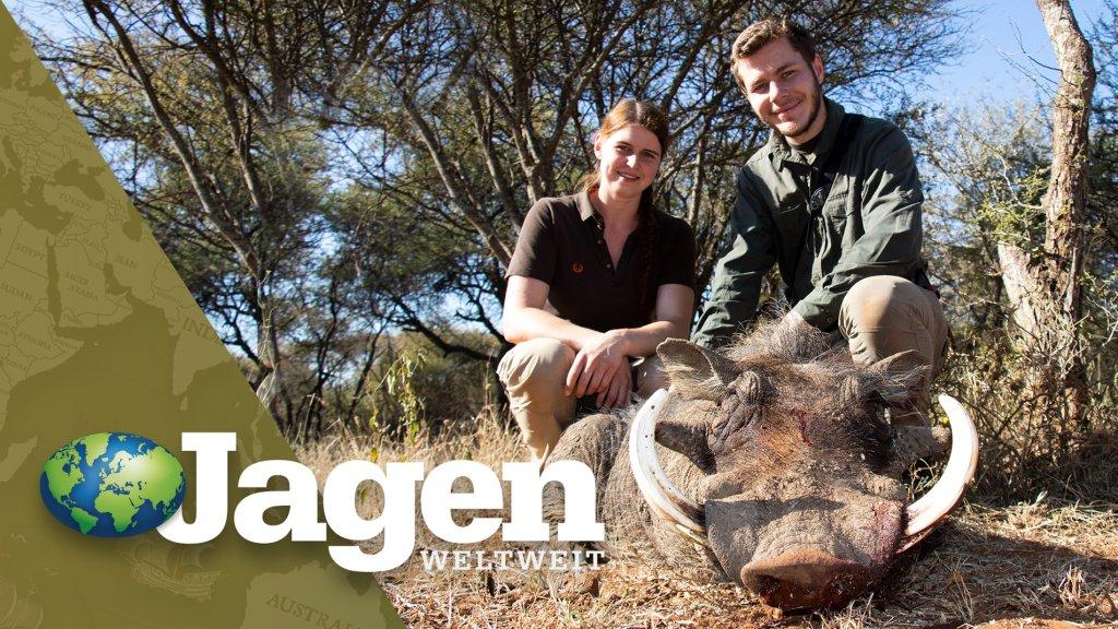 Starke Warzenkeiler in Südafrika