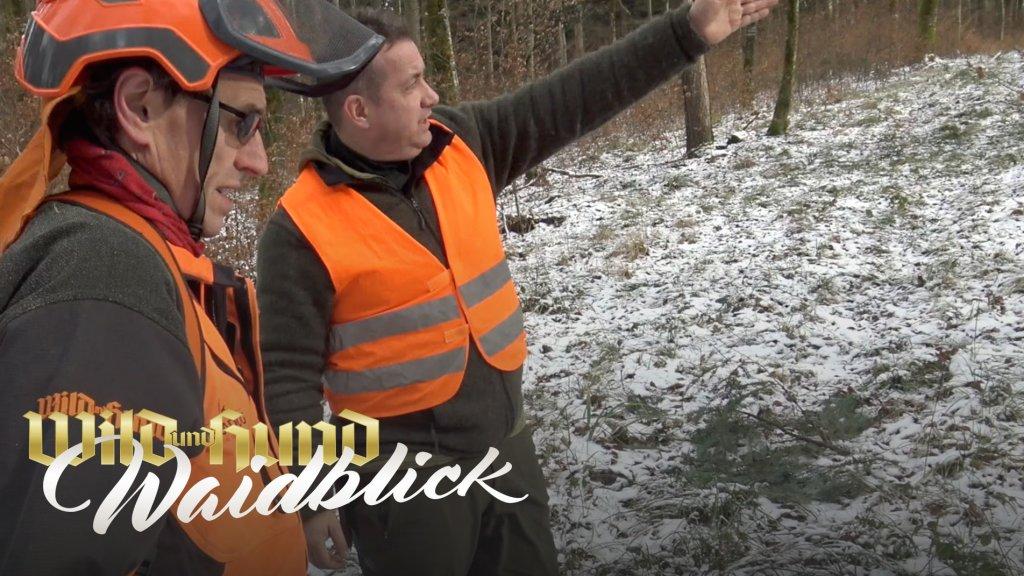 Länderübergreifende Drückjagd - Hundeführer Hubert Kapp auf Nachsuche