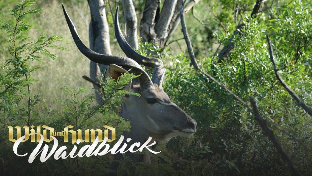 Der Jagdtraum - Das erste Mal in Südafrika