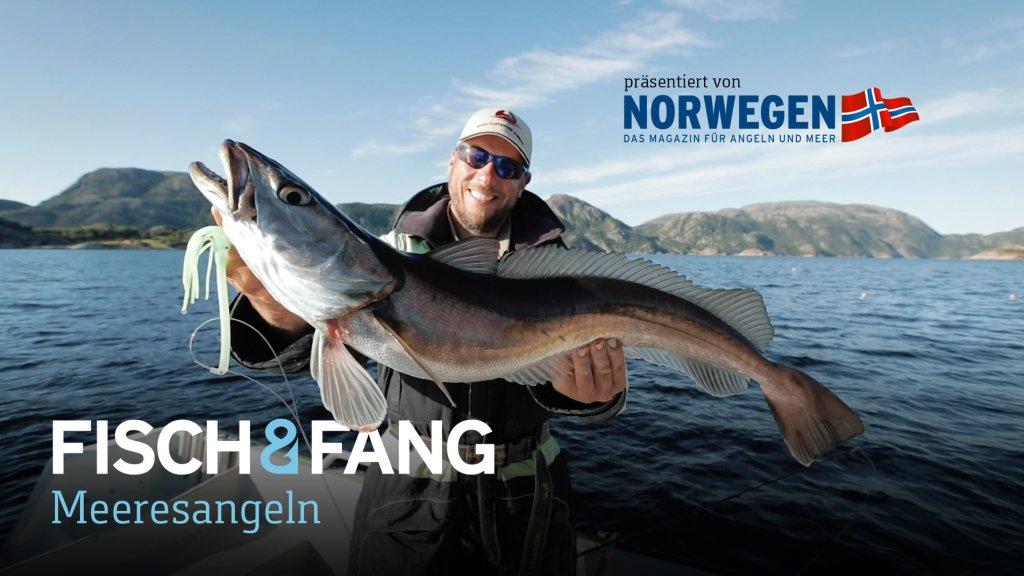 Auf Seehecht in Norwegen