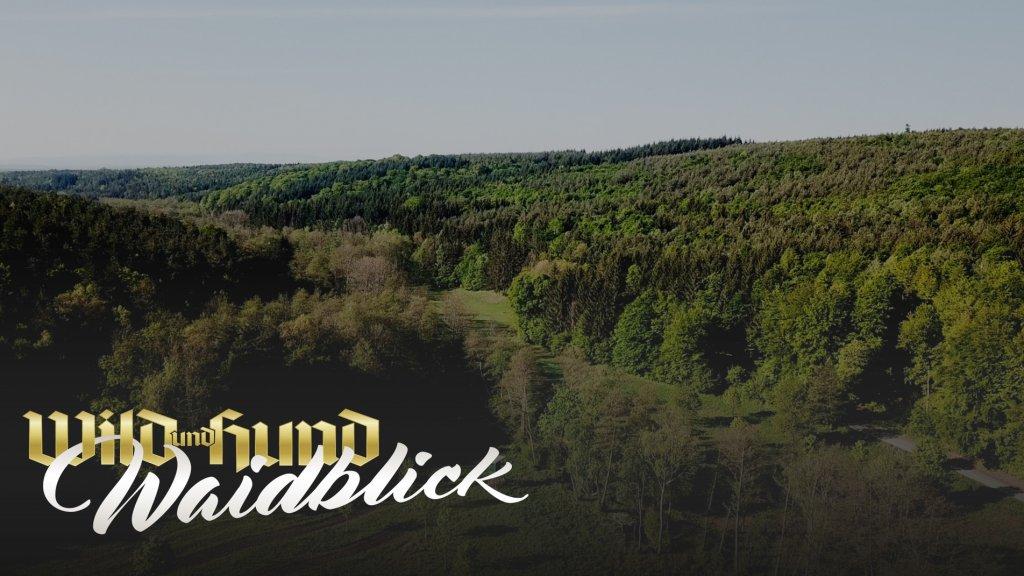 Im Burgenland bei Esterhazy - Niederwildhege und ökologische Landwirtschaft