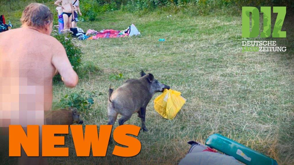 Wutz schnappt Badetasche, aggressiver Rehbock, Waldbrand u.w. - DJZ-News 33/2020