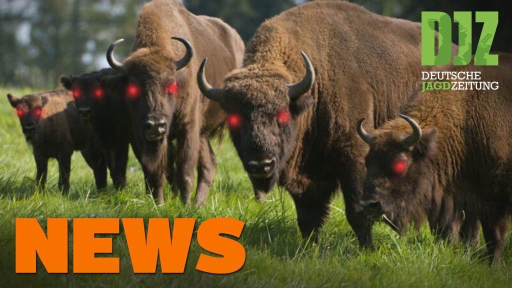 Bleifrei in 3 Jahren, Rekordstrecke, Wisente töten Hund u.w. - DJZ-News 29/2020