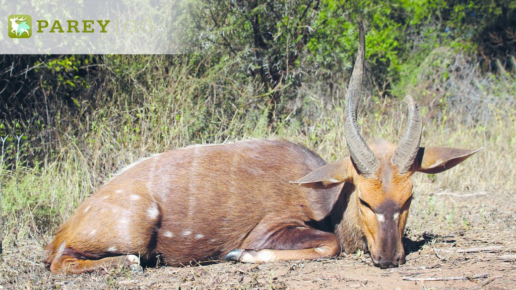 Auf Drehhörner in Südafrika – Teil 2