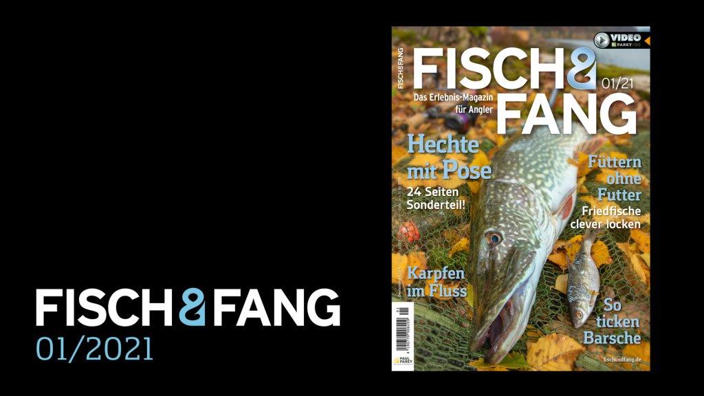 FISCH & FANG 01/2021
