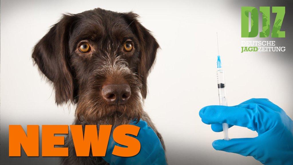 Verfahren gegen Vocke eingestellt, Elch gegen Auto, Antibiotika-Verbot für Tiere - DJZ News 35/2021