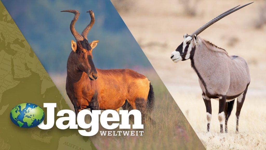 Namibia, Teil 2: Auf Oryx und Hartebeest