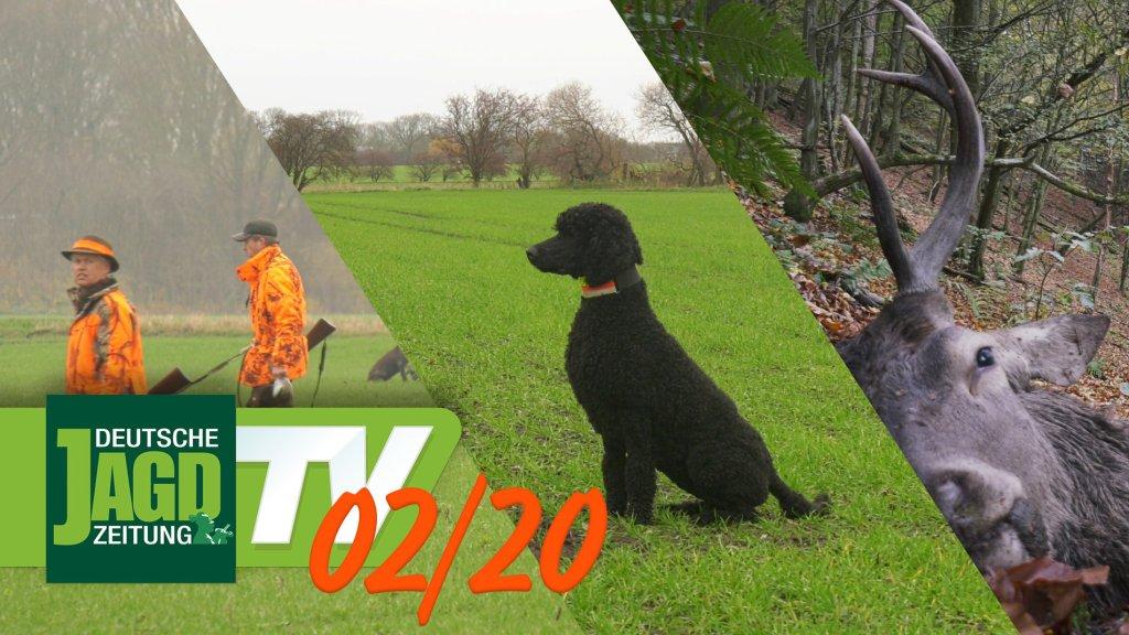 DJZ-TV Ausgabe Februar 2020