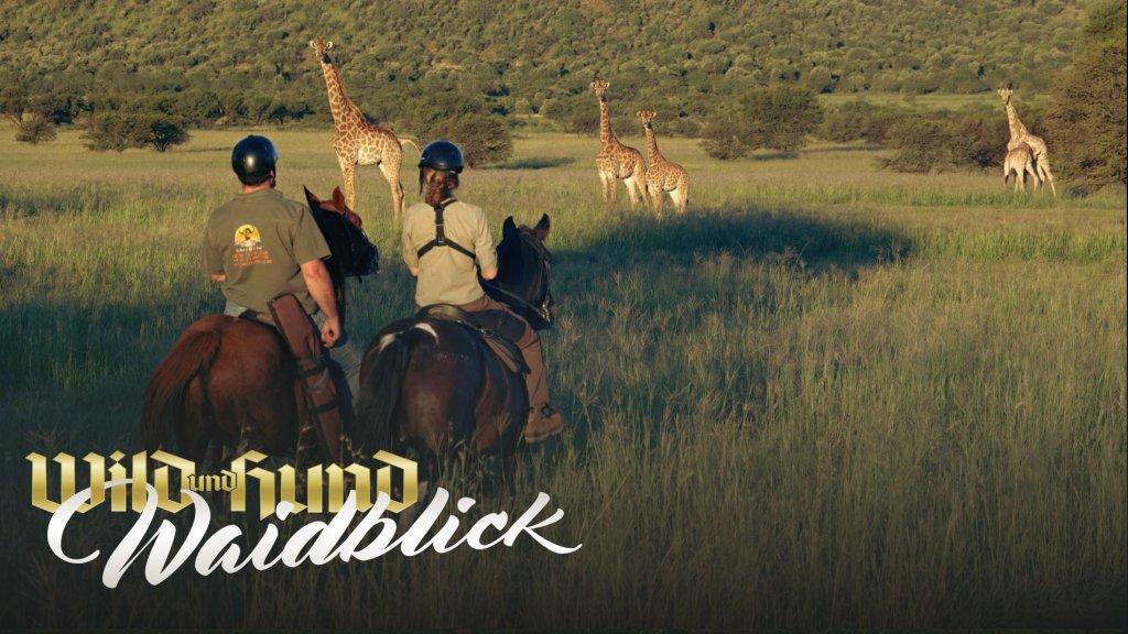 Pferde-Pirsch in Südafrika