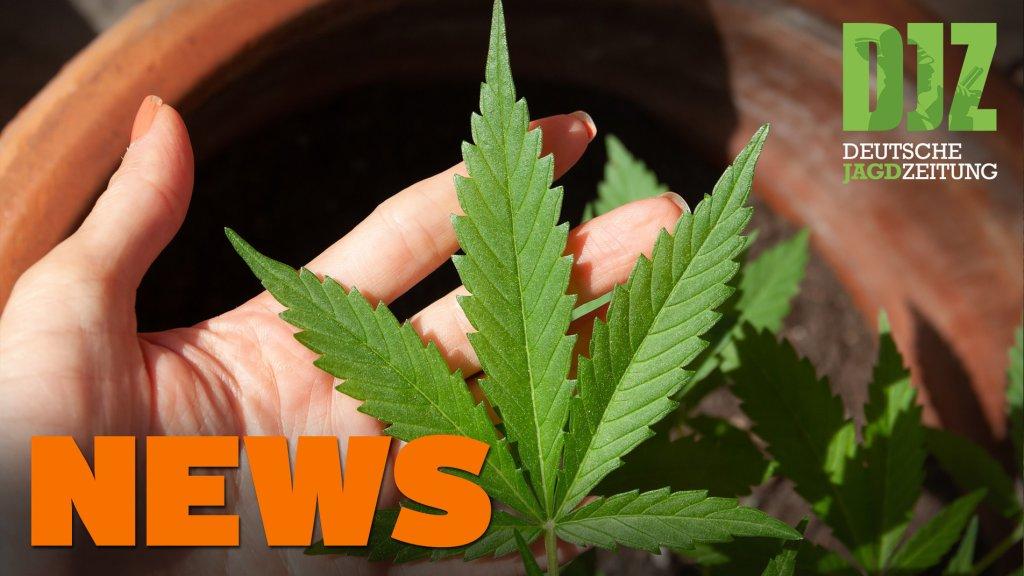 """Erntejagden während Corona, ungewöhnliche """"Beute"""", Trüffelplantagen u.w. - DJZ-News 30/2020"""