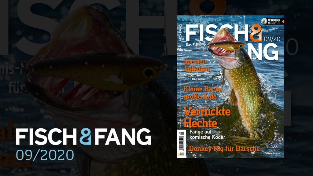 FISCH & FANG 09/2020