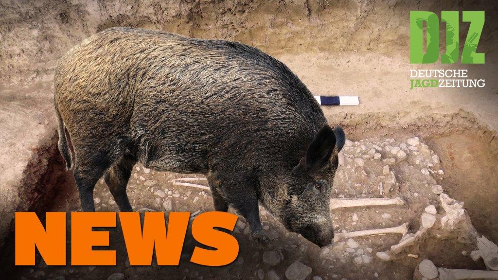 Jäger verhindert Brand, Wildschweine finden Siedlung, Deine Wahl, u.w. - DJZ-News 1/2021