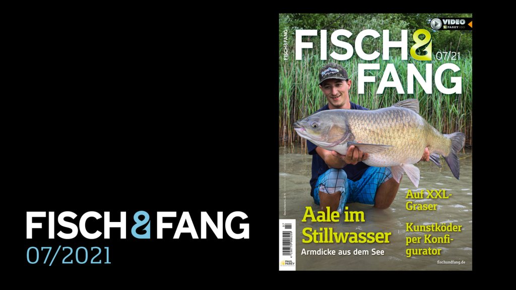 FISCH & FANG 07/2021